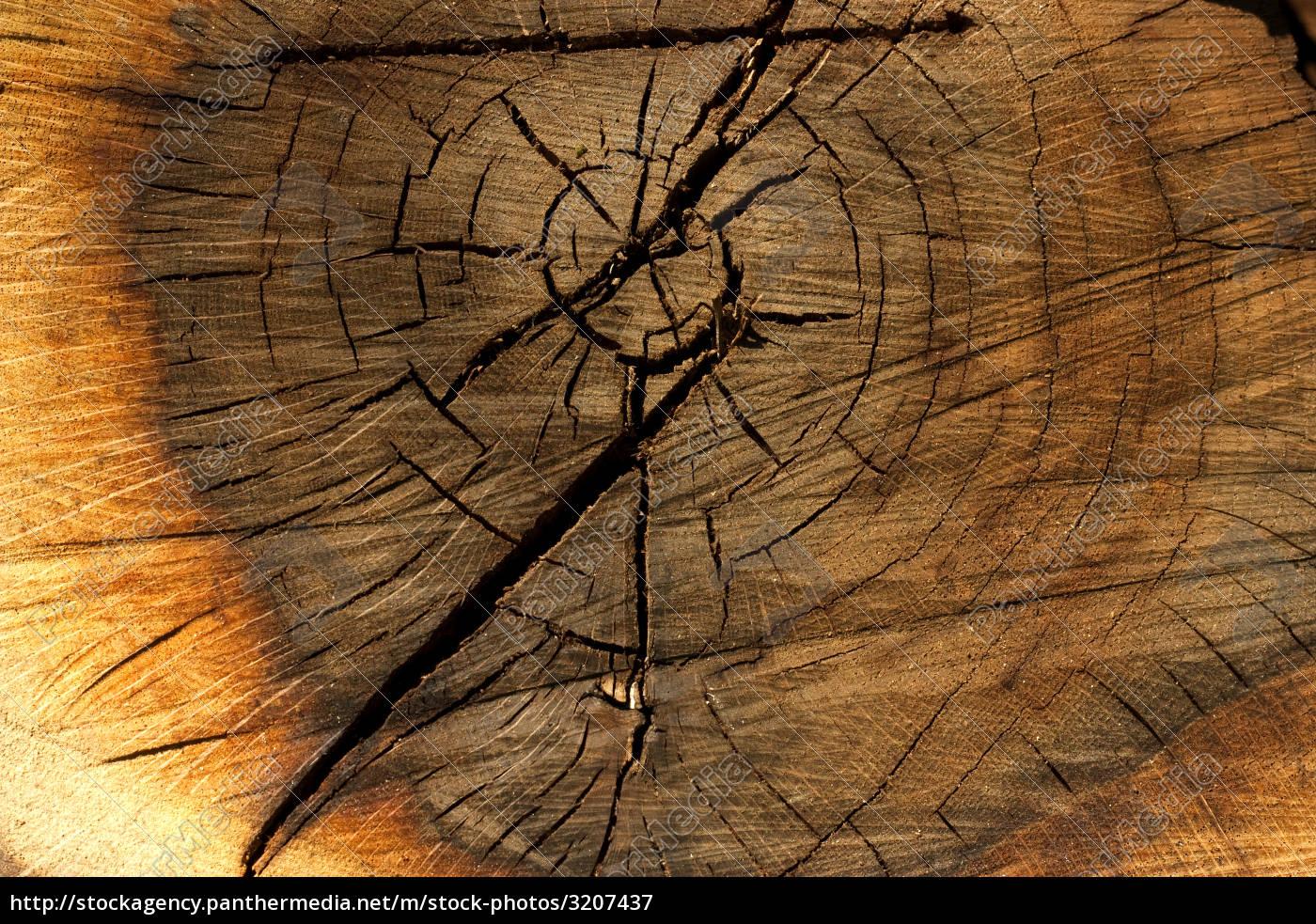tree, trunk - 3207437