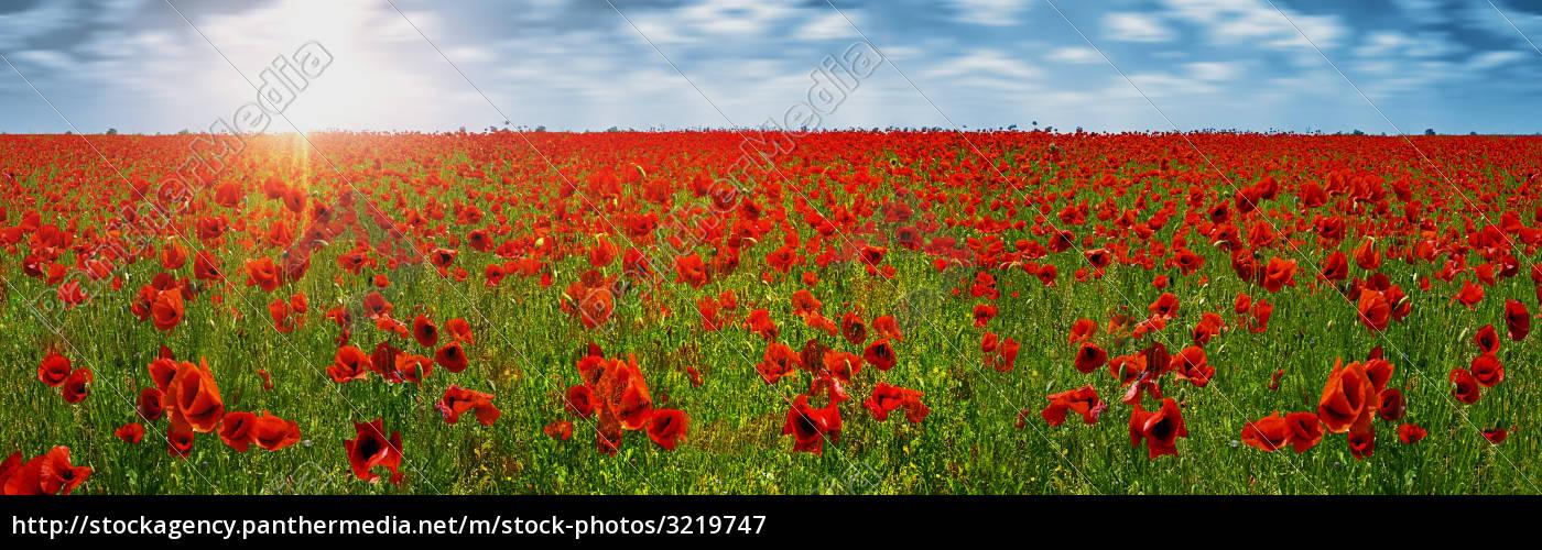 beautiful, beauteously, nice, bloom, blossom, flourish - 3219747