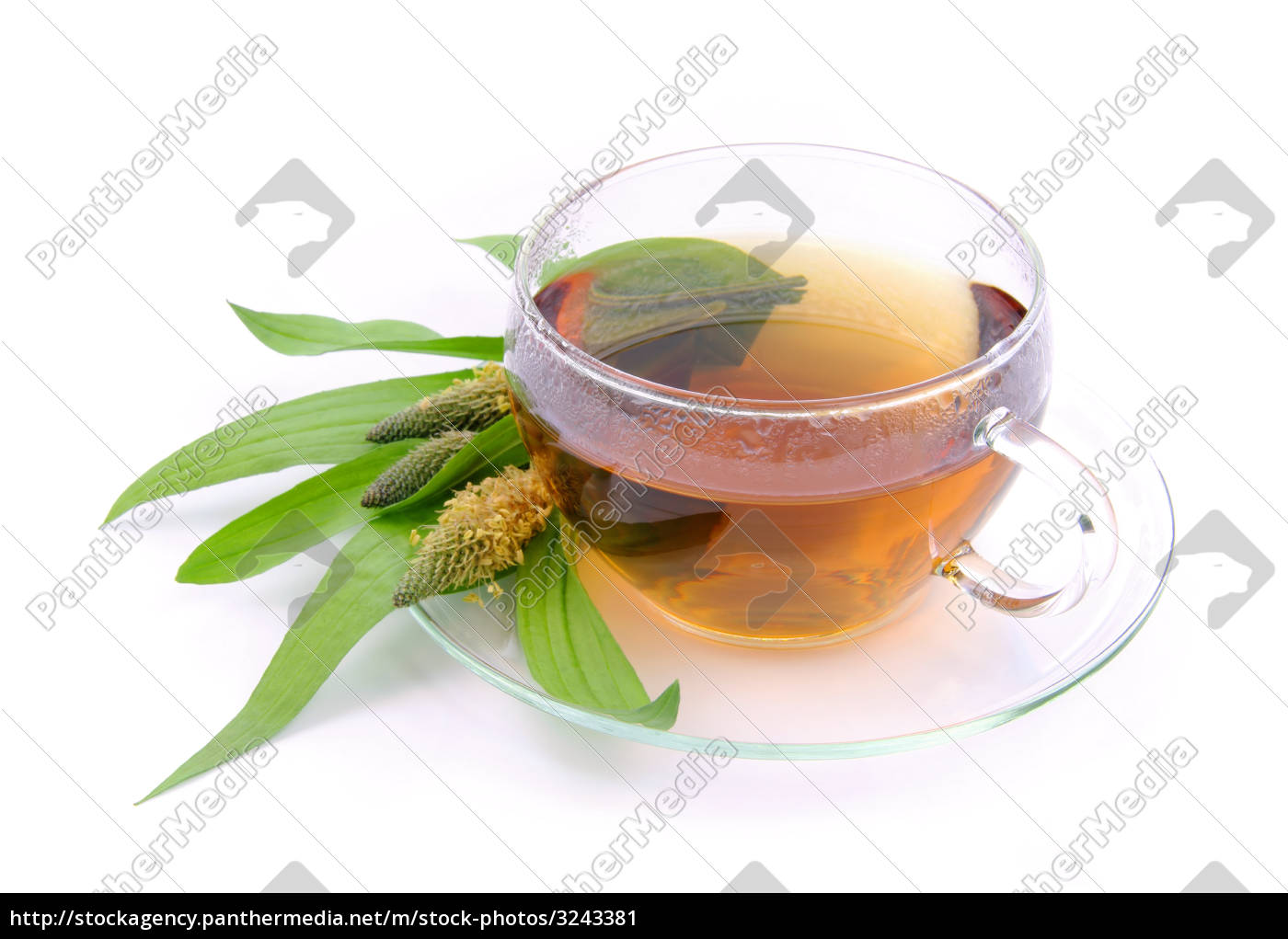 tea, plantain, -, tea, ribwort, plantain - 3243381