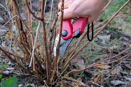 bush verschneiden shrub cutting 06