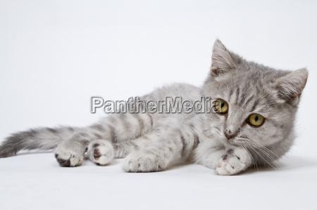 sweet, 02, kittten - 3251743