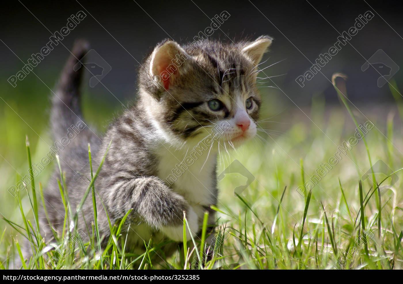 animals, pets, pussycat, cat, domestic cat, babykatze - 3252385