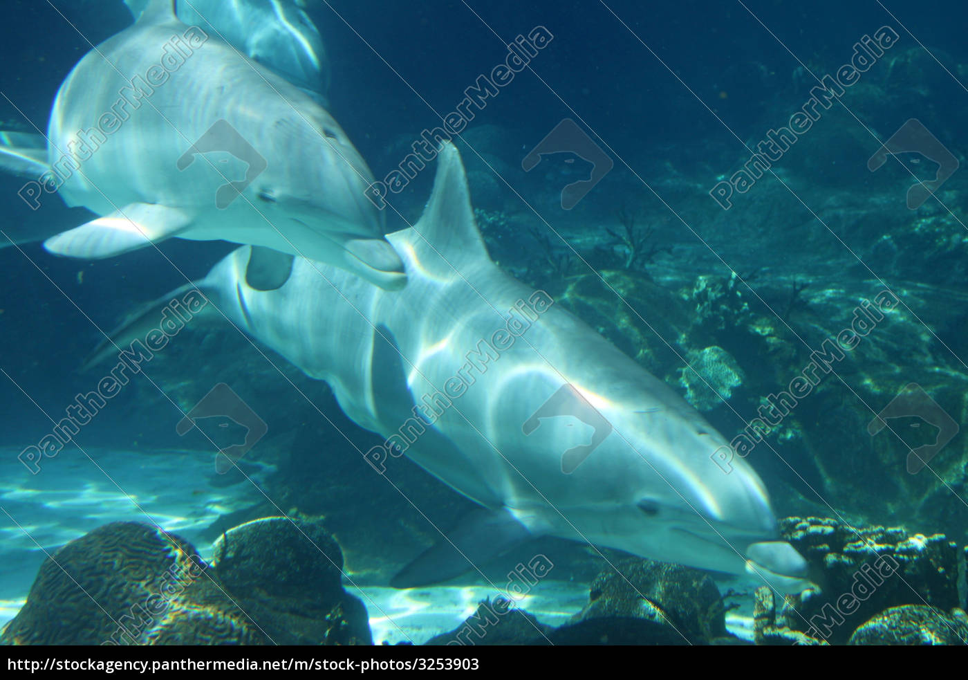 dolphins - 3253903