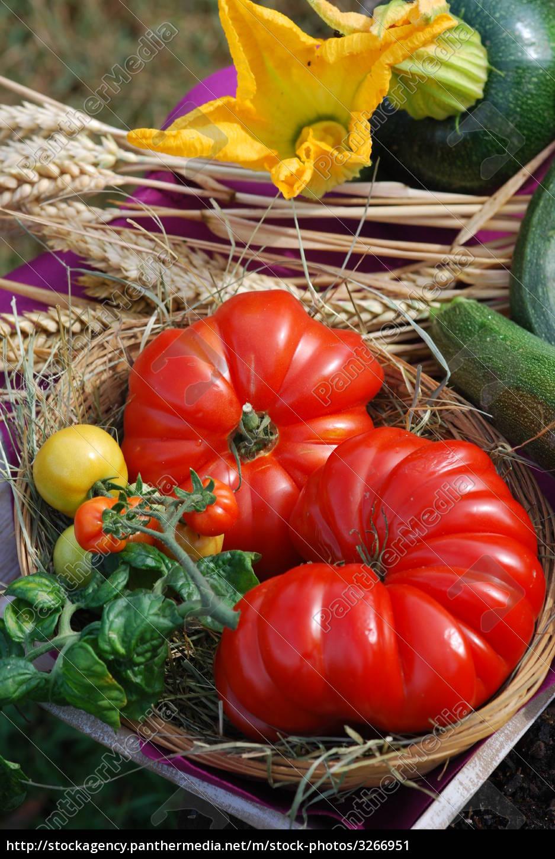 vegetable, harvest - 3266951