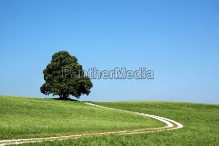 summery, landscape - 3271243