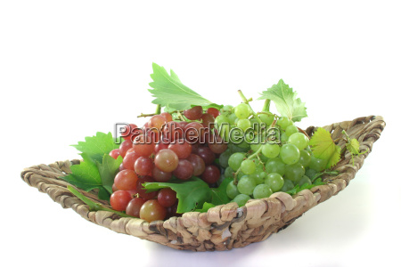 progenies fruits fruit vine grape vine