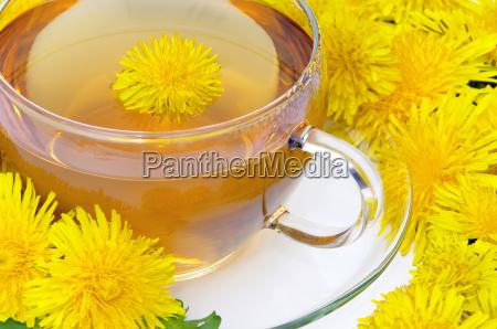 dandelion, tea, -, tea, dandelion, 08 - 3285519