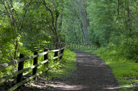 forest, path - 3286015