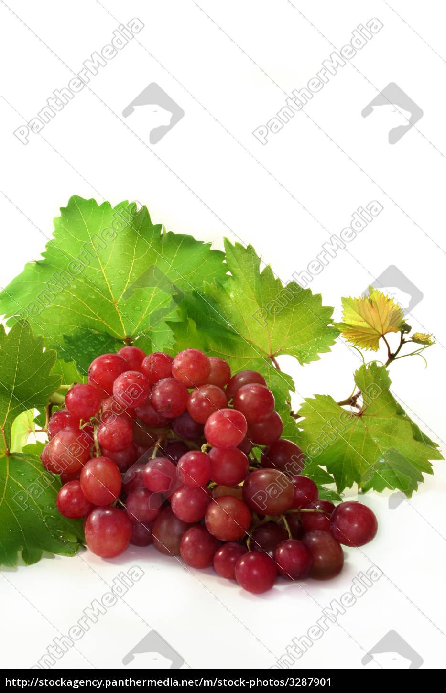 grapes - 3287901