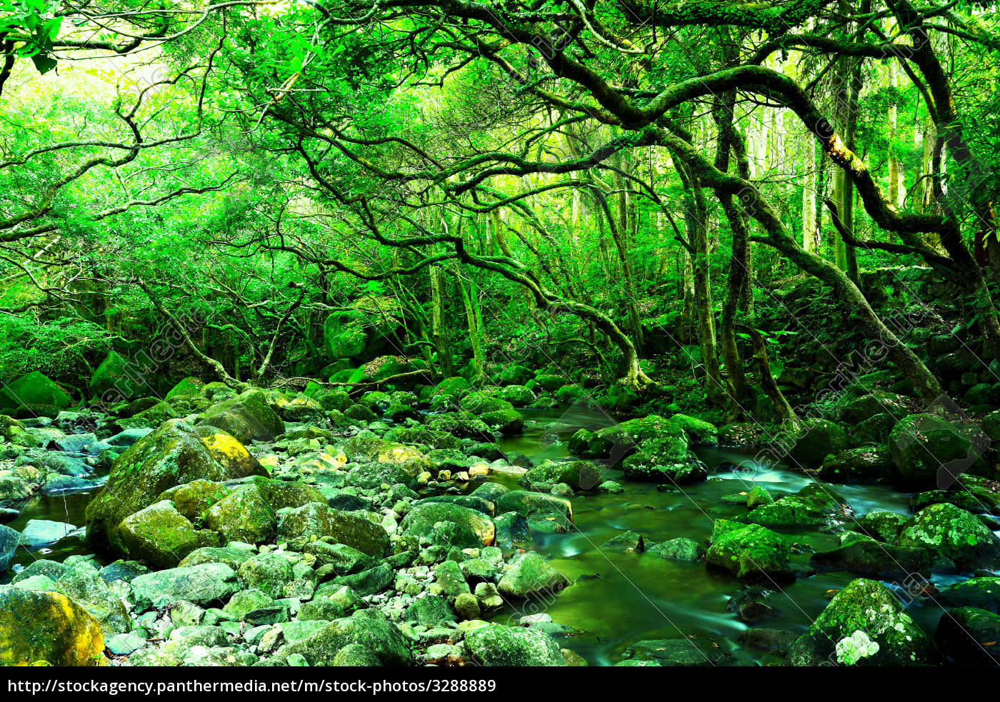water, spring, in, forest - 3288889