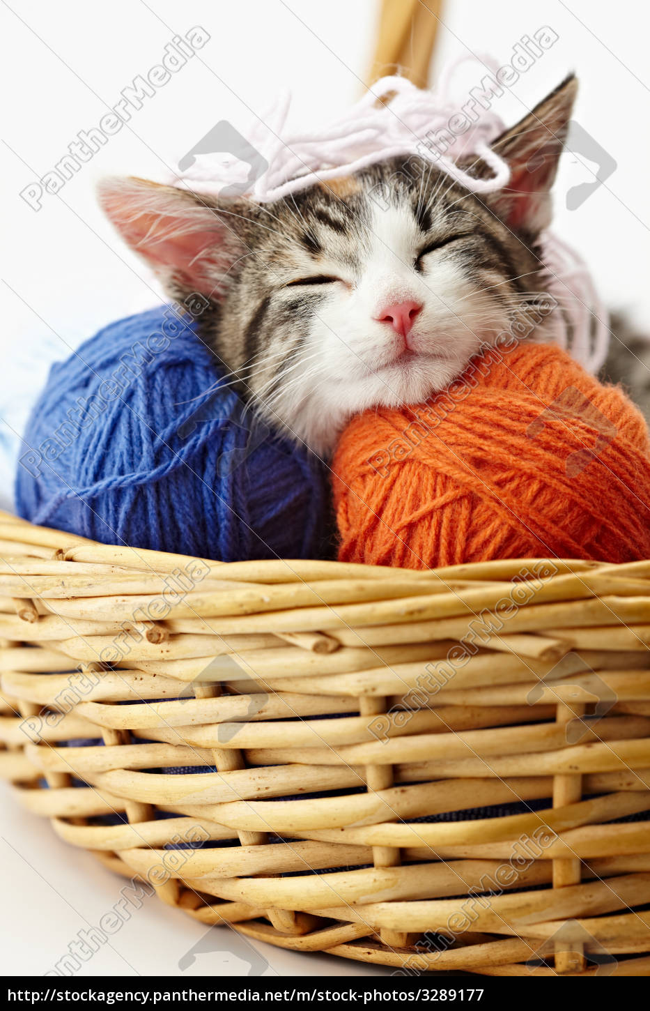 cat, playing, with, yarn - 3289177
