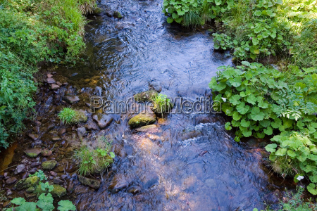 mountain, stream, in, the, black, forest, baiersbronn - 3292769