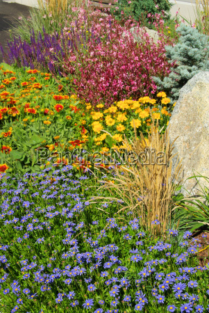 gartenmargerite garden marguerite 07
