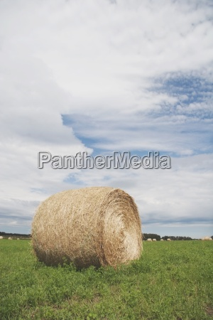 alberta canada a hay bale in
