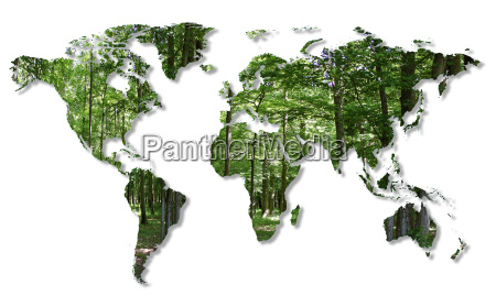 destruction of the forests in the