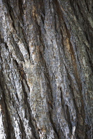 close up of the bark of