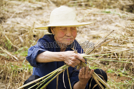 farmer preparing a bundle of wheat