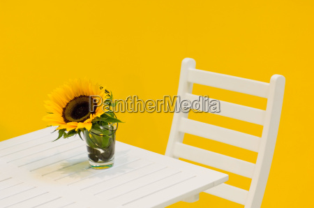 sunflower on garden table