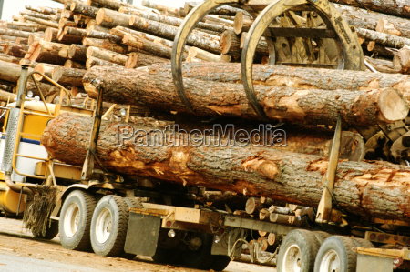 logs being unloaded off a truck