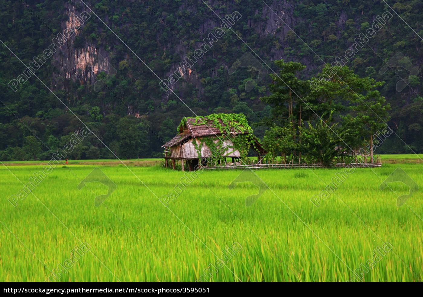 farmhouse, in, laos - 3595051
