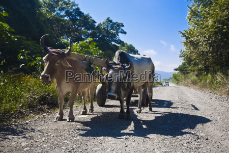 ox cart on a dirt road