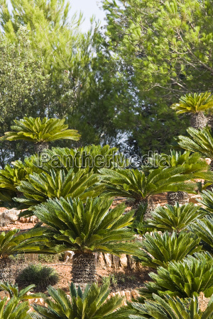 tree summer summerly coloured decoration flavour