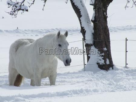 sanchos in winter