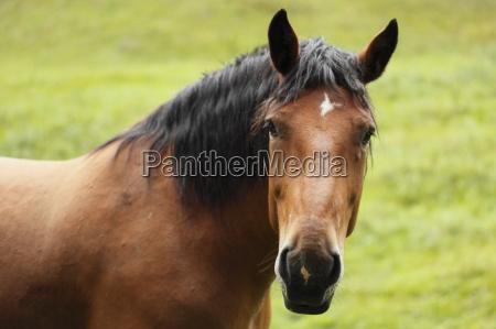 horse animal curious nosey nosy portrait