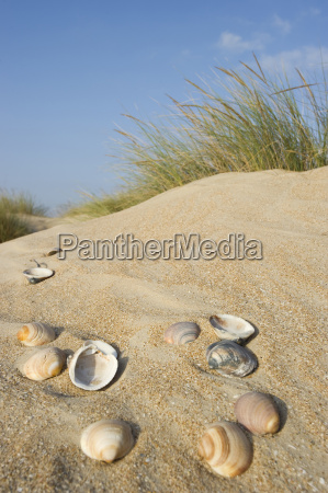 beach seaside the beach seashore shell
