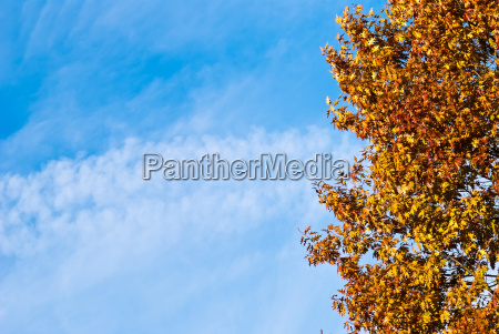 colored tree against a blue sky