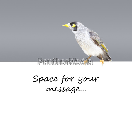 bird sydney