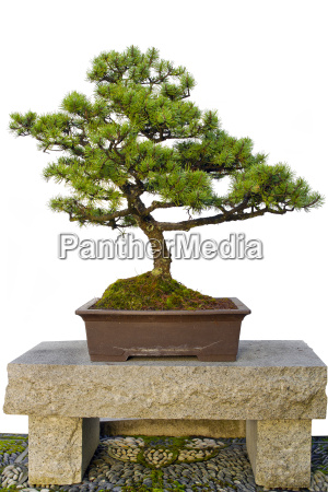 bonsai tree sitting on stone bench