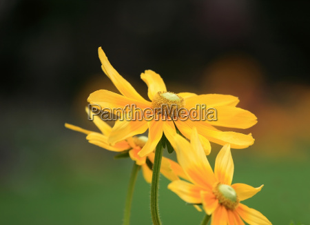 pretty yellow spring flowers in the