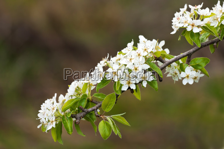 very nice spring flowers on an