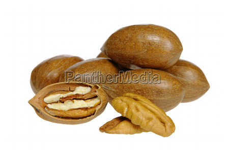 pecan nut pecan nut 04