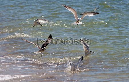 fish end birds