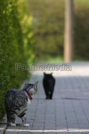 cats farewell