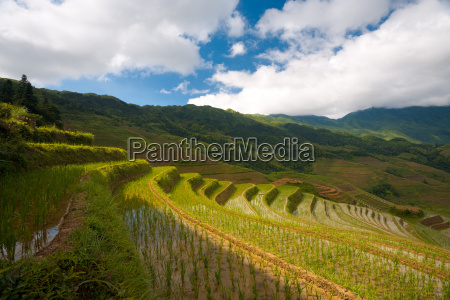 sunny rice terraces flooded dragons backbone