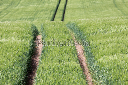 track in a green field of