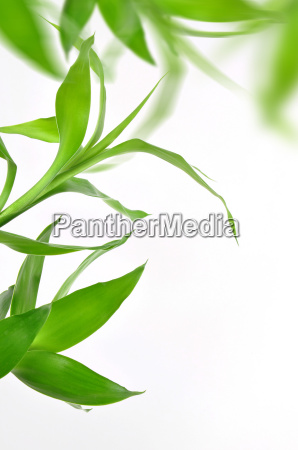 nature bamboo leaf pattern