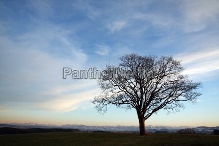 tree with views of the alps
