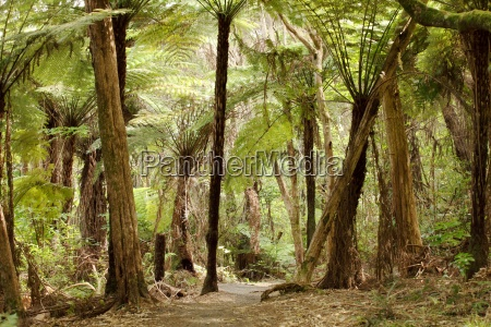 ferns in the jungles of new