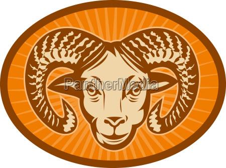 bighorn sheep or ram