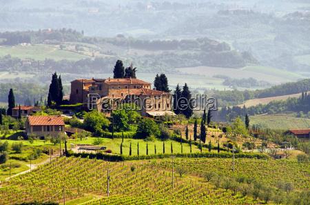 tuscany weingut tuscany vineyard 03