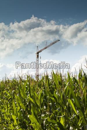 crane in cornfield