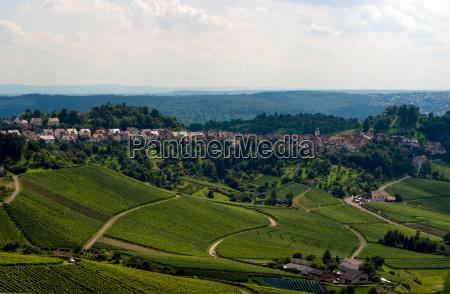 vineyard in the fall of stuttgart