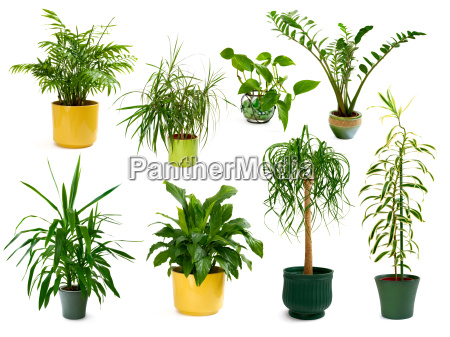 a set of eight exempted houseplants