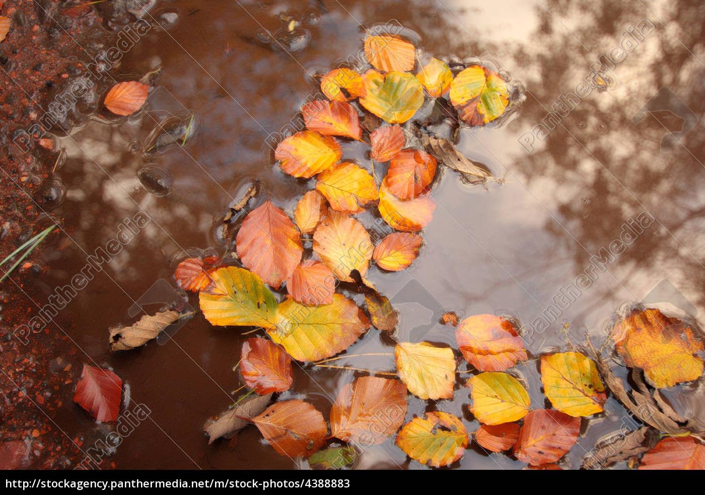 beautiful, autumn, in, scotland - 4388883