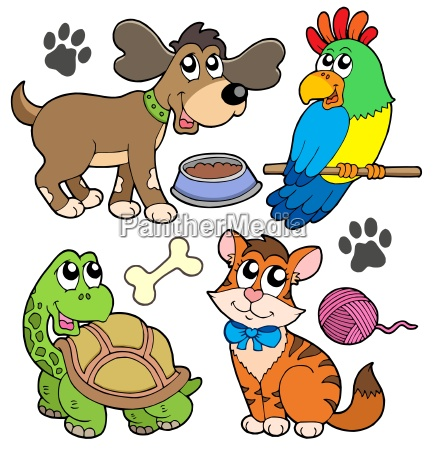 pet collection