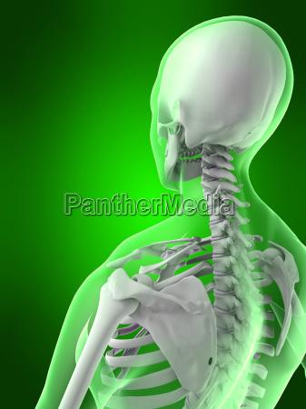 female skeletal back